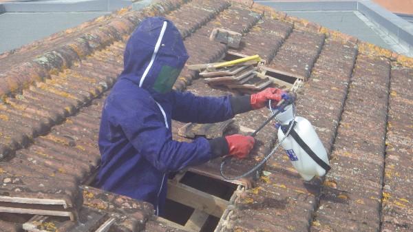 traitement de nids de guêpes sous une toiture à Toulouse