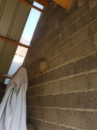 Destruction des nids de guêpes à Arras