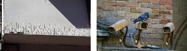 Problèmes de pigeons?<br /> <br /> Nous avons la solution, dépigeonnage, protection des bâtiments et patrimoine.
